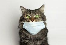 Cat wearing a Mask