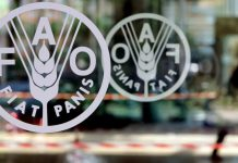 Food & Agriculture Organization Image