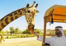 Dubai Park reopens from October 5 with new attractions