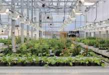 Indoor Farms