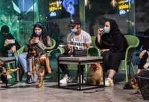 Saudi pet cafe