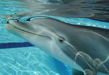 These robotic dolphins can transform the future of marine parks