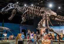 Stan T-Rex Image