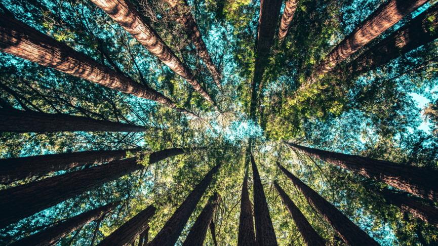 Tree Canopy Image