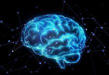 Researchers use machine intelligence to hasten brain mapping