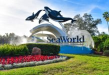 UAE's Tabreed unites with Miral to provide district cooling at SeaWorld Abu Dhabi