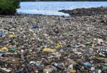 Global banks continue to finance plastic industry amid growing concerns
