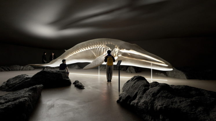Whale Museum Image
