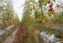 Pure Harvest Farm Image