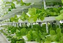 Indoor Vertical Farm
