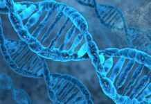 Modern humans only have 7% of unique DNA than ancestors; Study