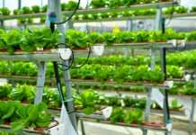 Sokovo to set up state-of-the-art vertical farm in Dubai Industrial City
