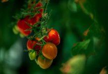 Red Sea Farms