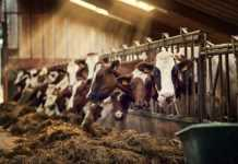 Bahrain welcomes Brazilian investment in animal products to achieve food security