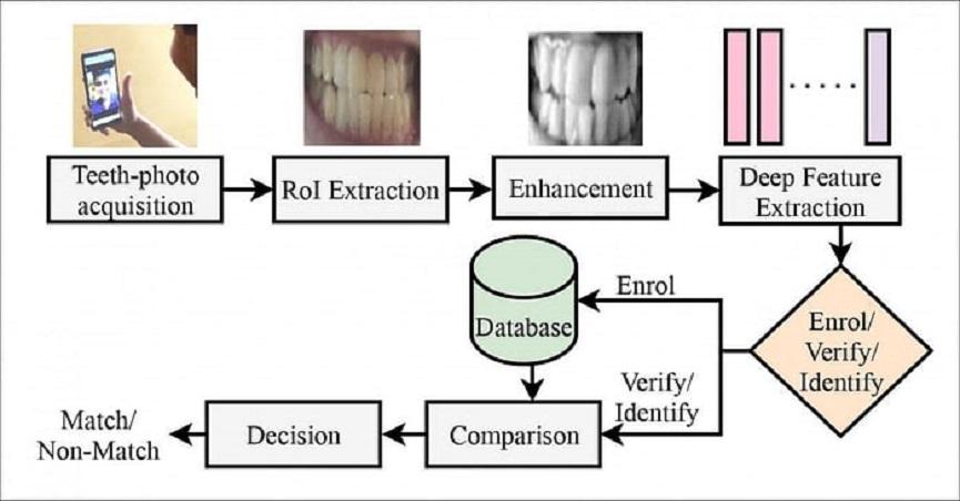 Deepteeth-Diagram