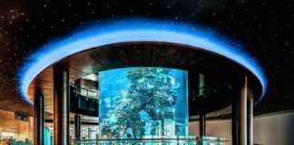 Mall of Dilmunia image